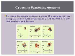 В состав белковых молекул входит 20 аминокислот из которых может быть образов