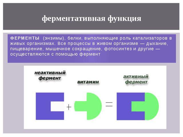 ФЕРМЕНТЫ (энзимы), белки, выполняющиероль катализаторов в живых организмах....