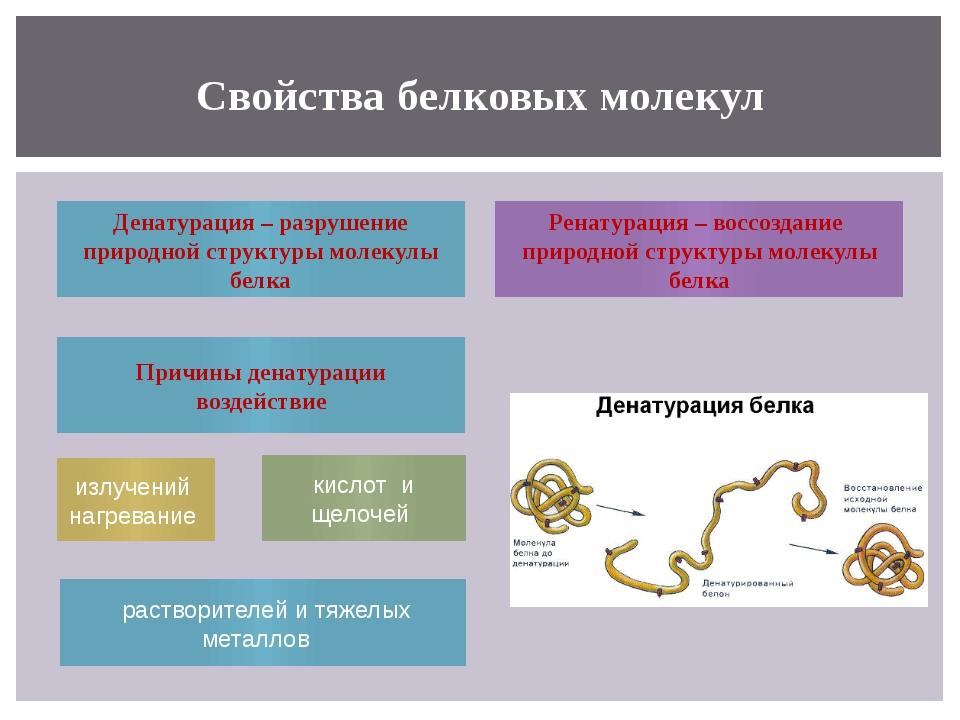 Свойства белковых молекул Денатурация – разрушение природной структуры молеку...