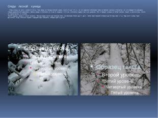 Следы лесной куницы След куницы на снегу узнается легко. Сам зверь не больше