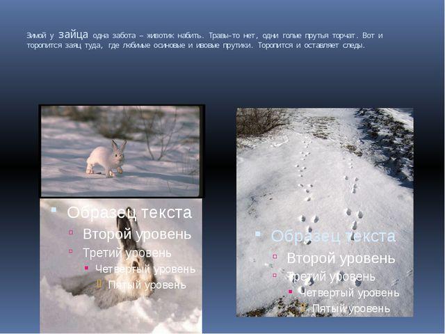 Зимой у зайца одна забота – животик набить. Травы-то нет, одни голые прутья т...