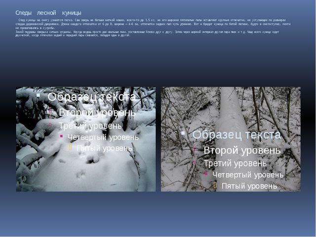 Следы лесной куницы След куницы на снегу узнается легко. Сам зверь не больше...