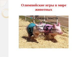 Олимпийские игры в мире животных