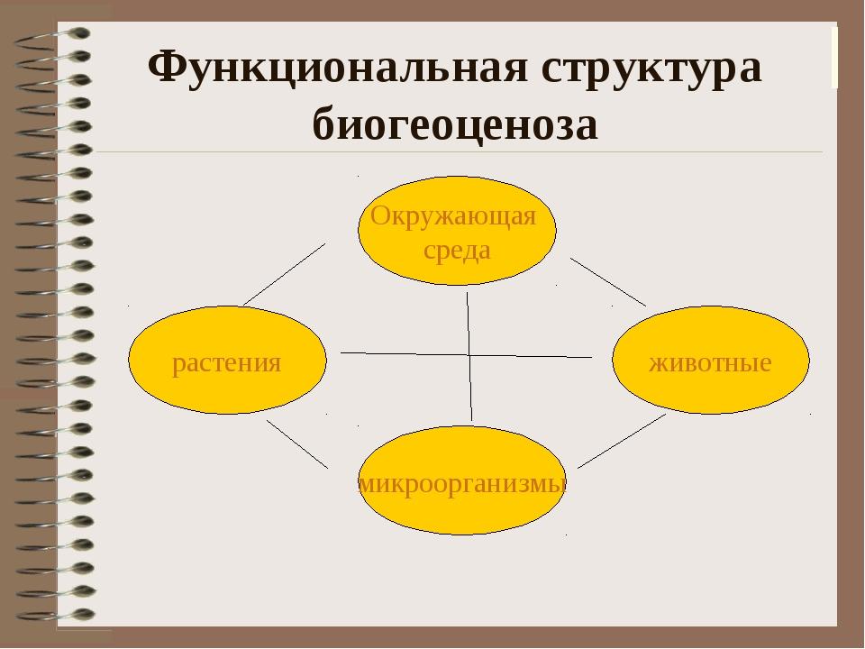 Функциональная структура биогеоценоза