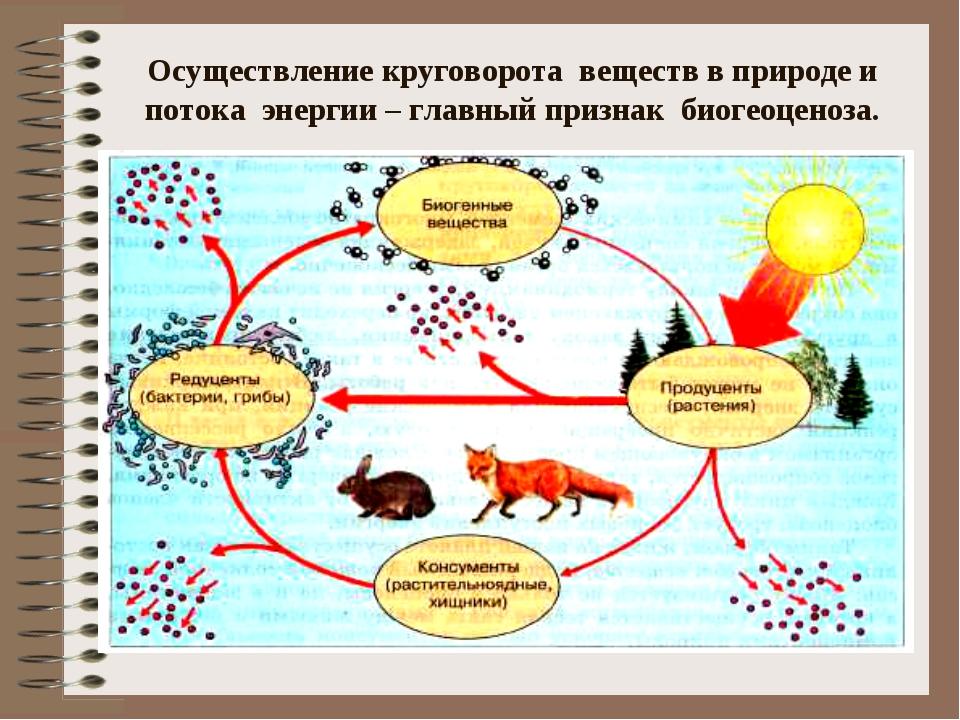 Осуществление круговорота веществ в природе и потока энергии – главный призна...