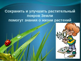 Сохранить и улучшить растительный покров Земли помогут знания о жизни растений
