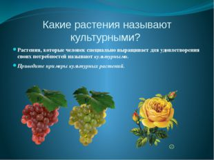 Какие растения называют культурными? Растения, которые человек специально выр