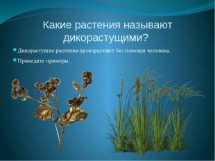 Какие растения называют дикорастущими? Дикорастущие растения произрастают без