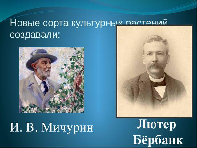Новые сорта культурных растений создавали: И. В. Мичурин Лютер Бёрбанк