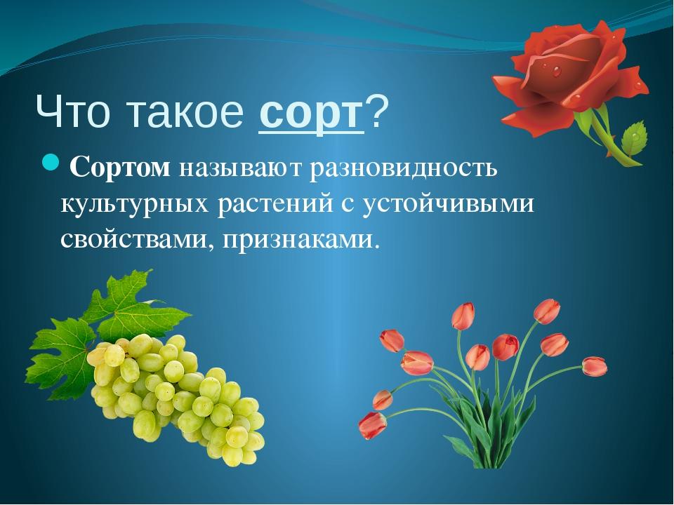 Что такое сорт? Сортом называют разновидность культурных растений с устойчивы...