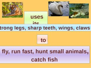 uses its strong legs, sharp teeth, wings, claws to fly, run fast, hunt small