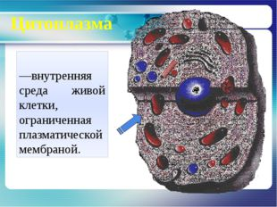 Цитоплазма Цитопла́зма—внутренняя среда живой клетки, ограниченная плазматич