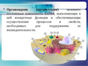 Органоидами (органеллами) называют постоянные компоненты клетки, выполняющие