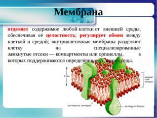 Мембрана отделяет содержимое любойклеткиот внешней среды, обеспечивая её це