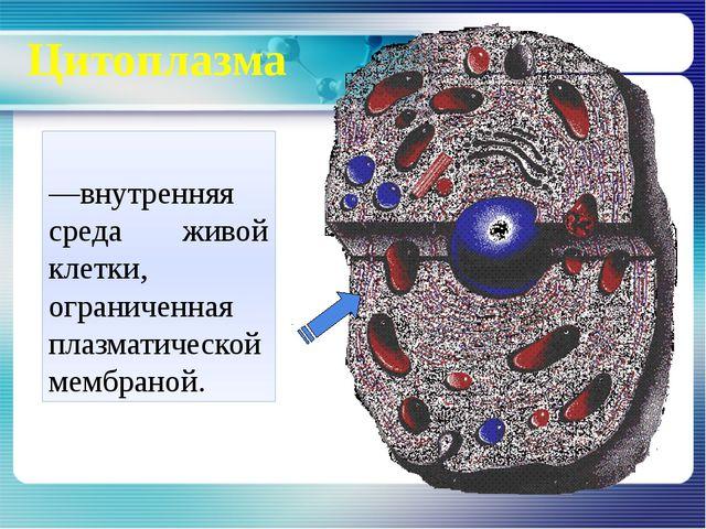 Цитоплазма Цитопла́зма—внутренняя среда живой клетки, ограниченная плазматич...