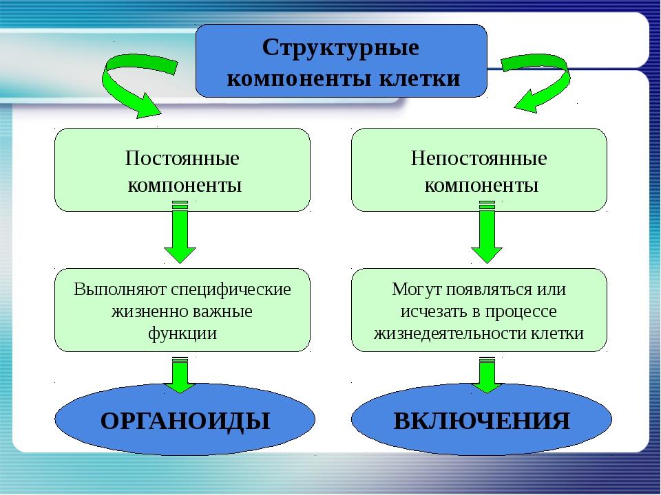 Постоянные компоненты Непостоянные компоненты Структурные компоненты клетки В...