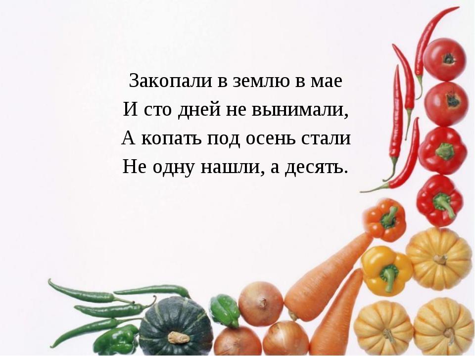Закопали в землю в мае И сто дней не вынимали, А копать под осень стали Не од...
