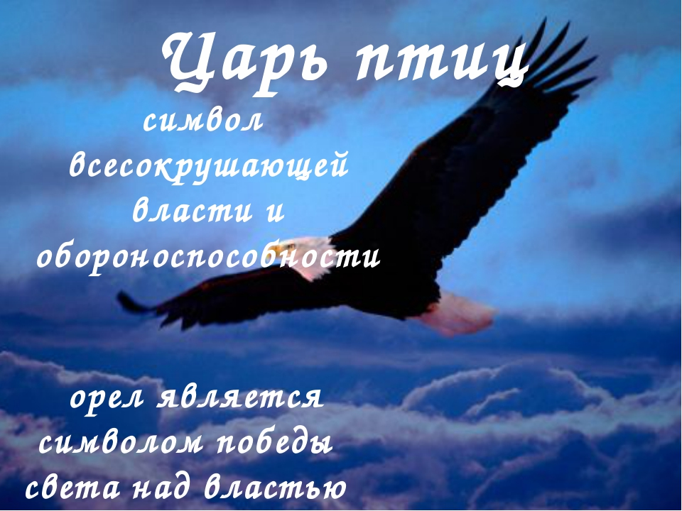 Царь птиц символ всесокрушающей власти и обороноспособности орел является с...