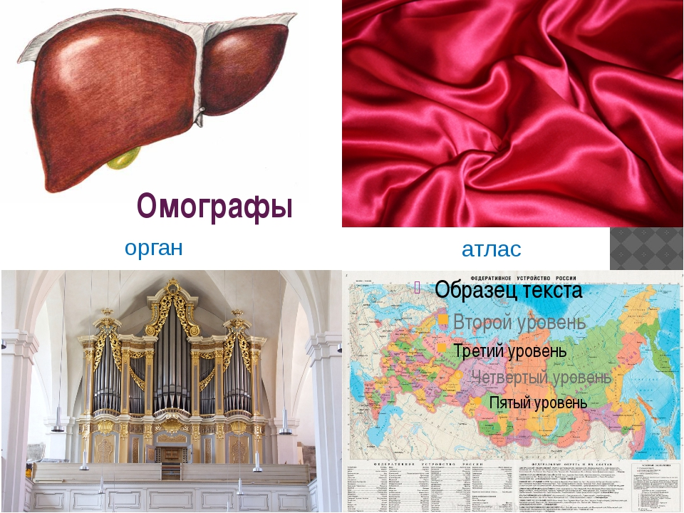 Омографы атлас орган