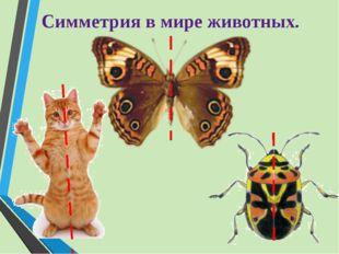 Симметрия в мире животных.