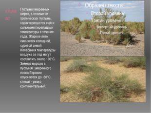 климат Пустыни умеренных широт, в отличие от тропических пустынь, характеризу