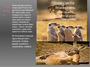 Животные Животный мир пустынь и полупустынь России тоже достаточно разнообраз
