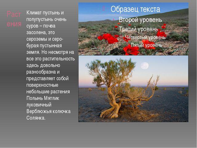 Растения Климат пустынь и полупустынь очень суров – почва засолена, это сероз...