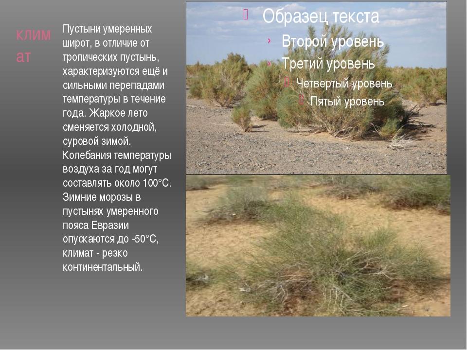 климат Пустыни умеренных широт, в отличие от тропических пустынь, характеризу...