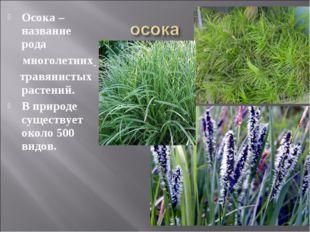 Осока – название рода многолетних травянистых растений. В природе существуе