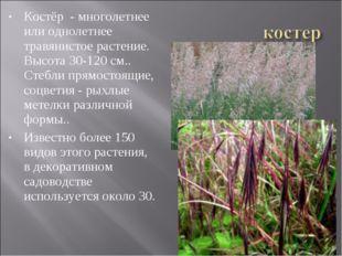 Костёр - многолетнее или однолетнее травянистое растение. Высота 30-120 см..