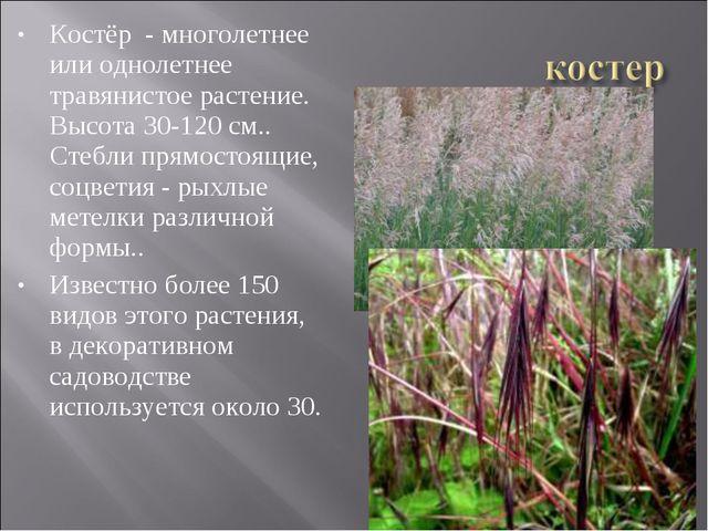 Костёр - многолетнее или однолетнее травянистое растение. Высота 30-120 см.....