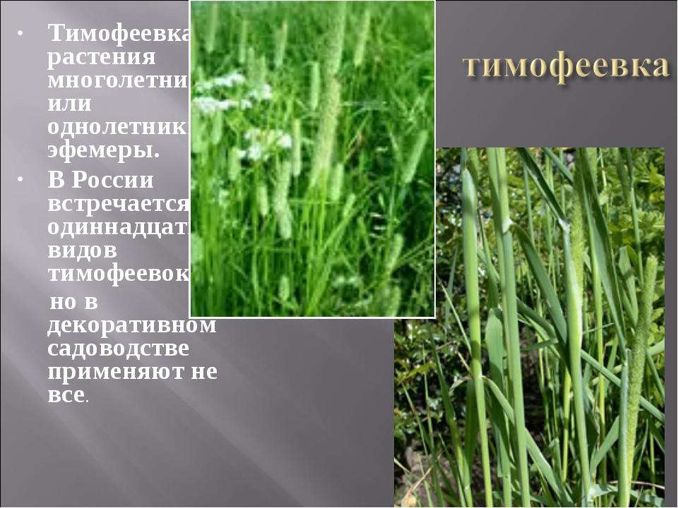 Тимофеевка – растения многолетние или однолетники-эфемеры. В России встречает...