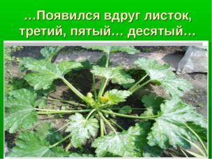 …Появился вдруг листок, третий, пятый… десятый…