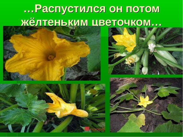 …Распустился он потом жёлтеньким цветочком…