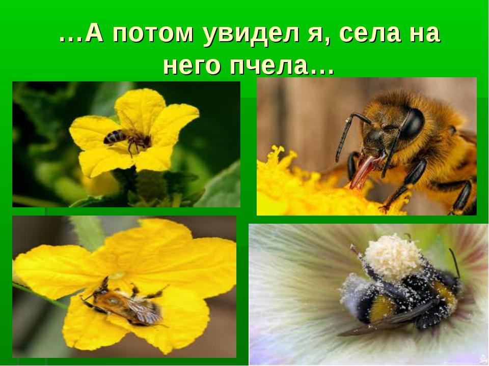 …А потом увидел я, села на него пчела…