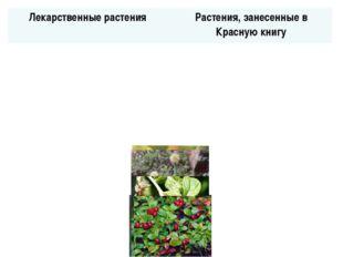 Лекарственные растения Растения, занесенные в Красную книгу