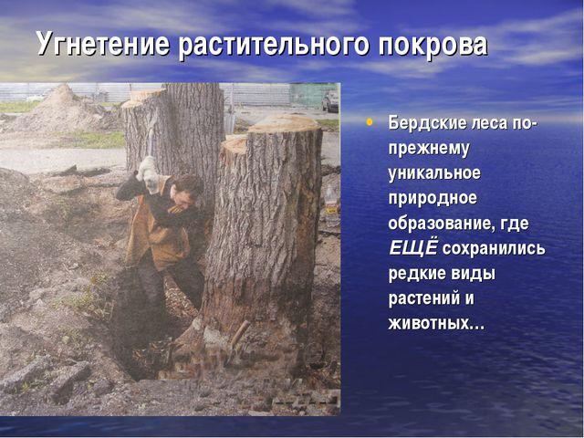Угнетение растительного покрова Бердские леса по-прежнему уникальное природно...