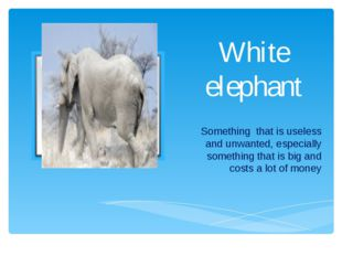 White elephant Something that is useless and unwanted, especially something t