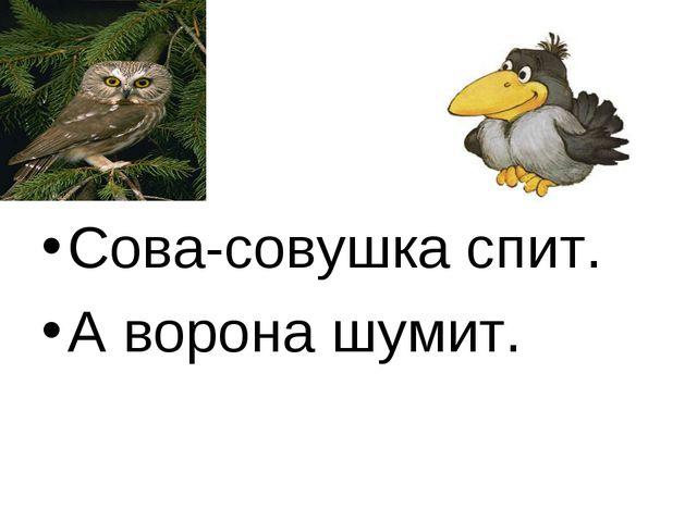 Сова-совушка спит. А ворона шумит.