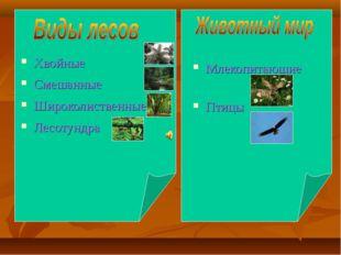 Хвойные Смешанные Широколиственные Лесотундра Млекопитающие Птицы