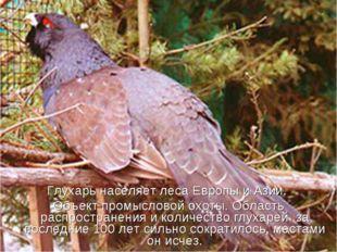 Глухарь населяет леса Европы и Азии. Объект промысловой охоты. Область распро