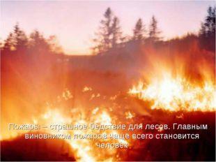 Пожары – страшное бедствие для лесов. Главным виновником пожаров чаще всего с