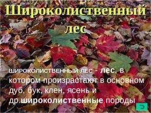 Широколиственный лес ШИРОКОЛИСТВЕННЫЙЛЕС- лес, в котором произрастают в осн