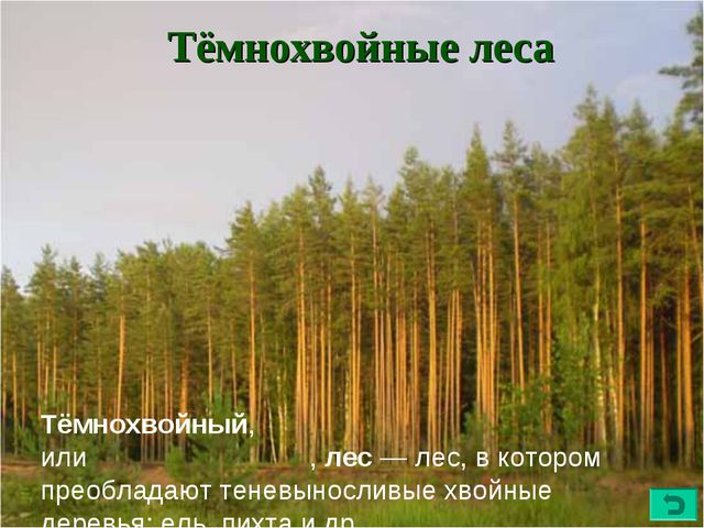 Тёмнохвойные леса Тёмнохвойный, илитемнохво́йный,лес—лес, в котором преоб...