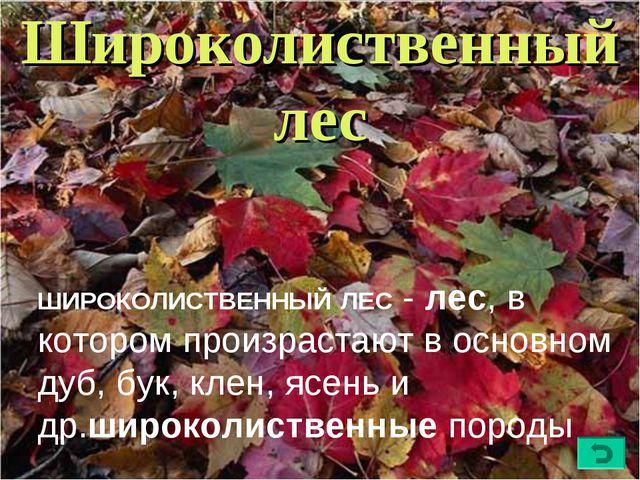 Широколиственный лес ШИРОКОЛИСТВЕННЫЙЛЕС- лес, в котором произрастают в осн...