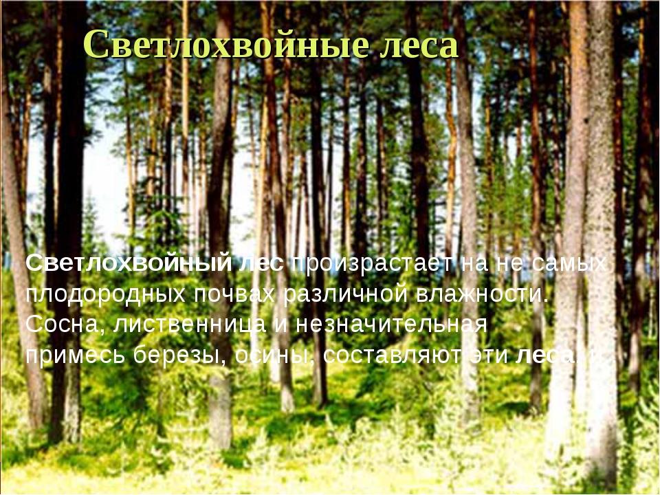 Светлохвойные леса Светлохвойныйлеспроизрастает на не самых плодородных поч...