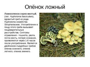 Опёнок ложный Ложноопенок серно-желтый, (лат. Hypholoma fasciculare), ядовиты