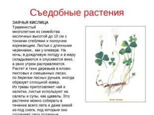 Съедобные растения ЗАЯЧЬЯ КИСЛИЦА Травянистый многолетник из семейства кислич