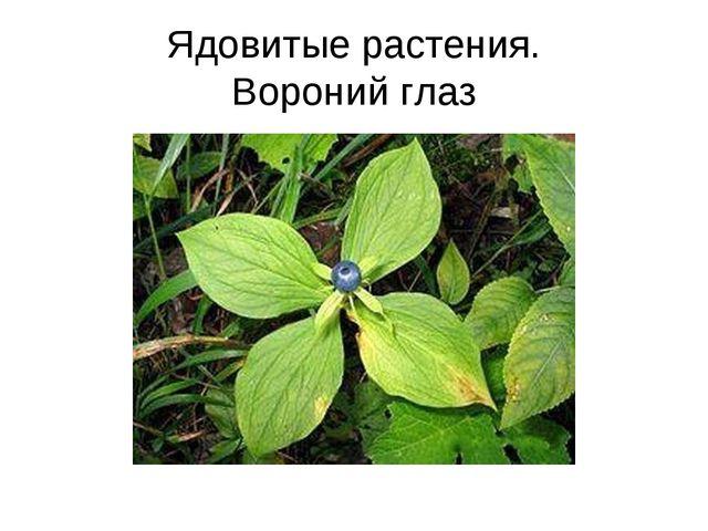 Ядовитые растения. Вороний глаз