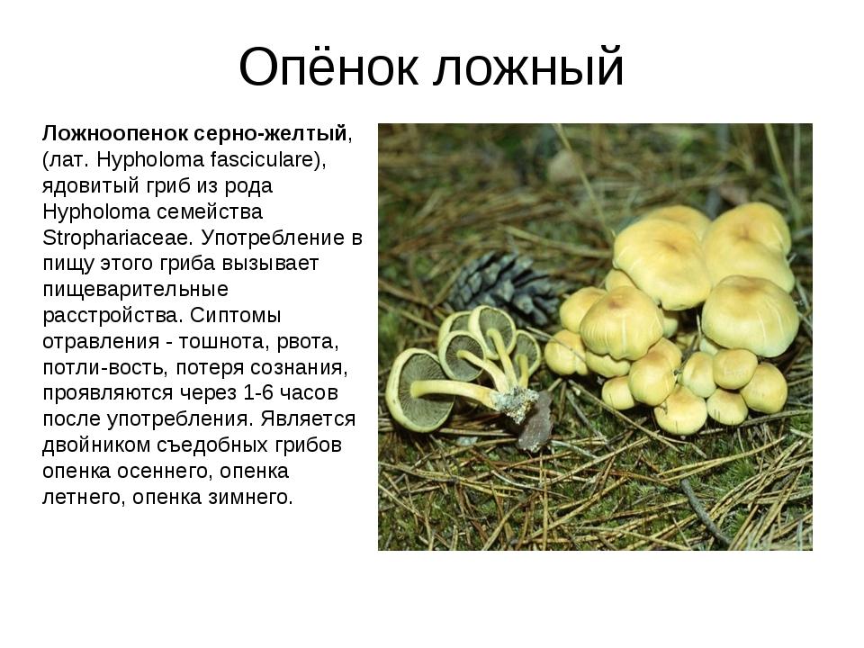 Опёнок ложный Ложноопенок серно-желтый, (лат. Hypholoma fasciculare), ядовиты...